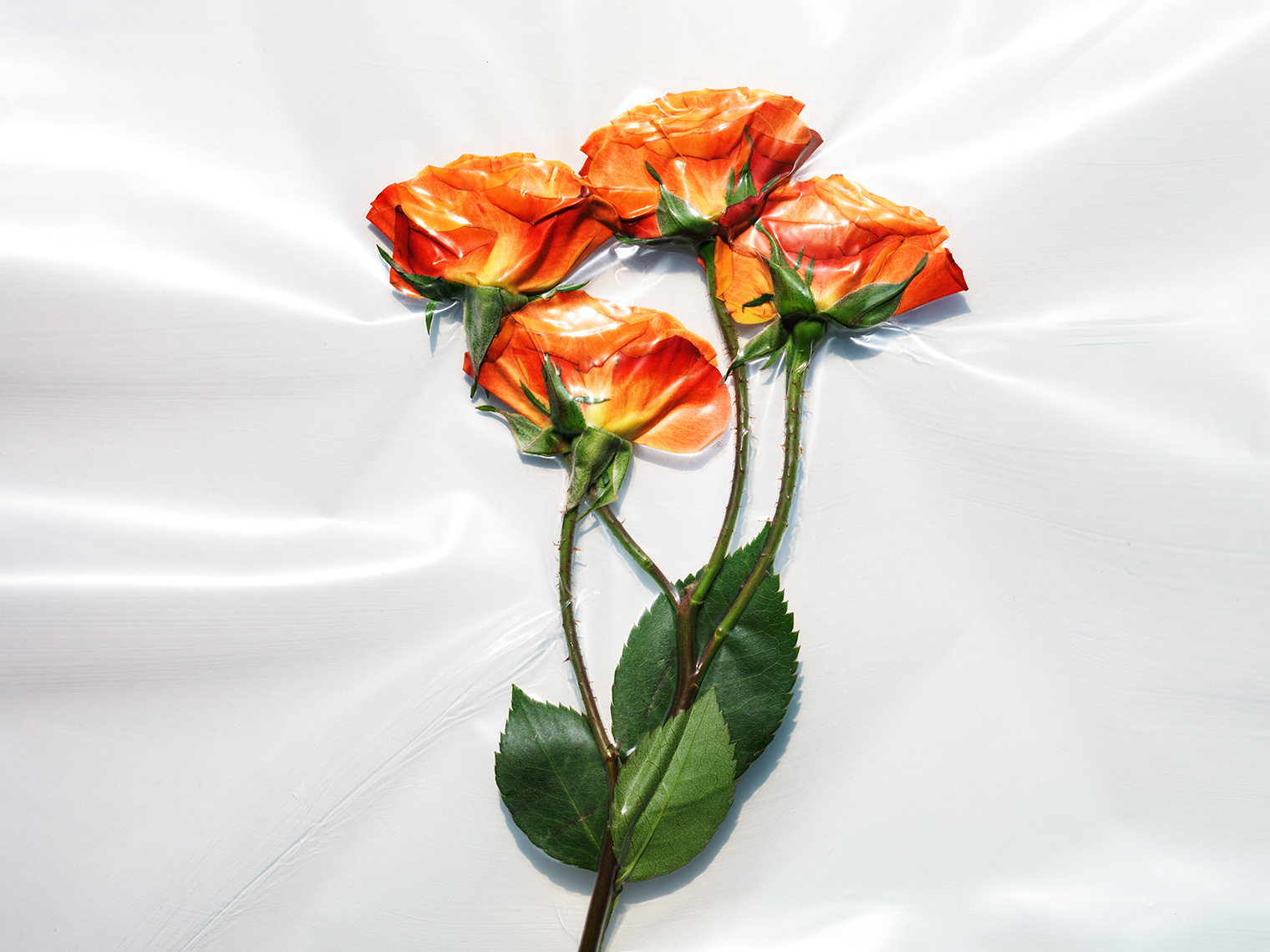 Vacuum Sealed Flowers