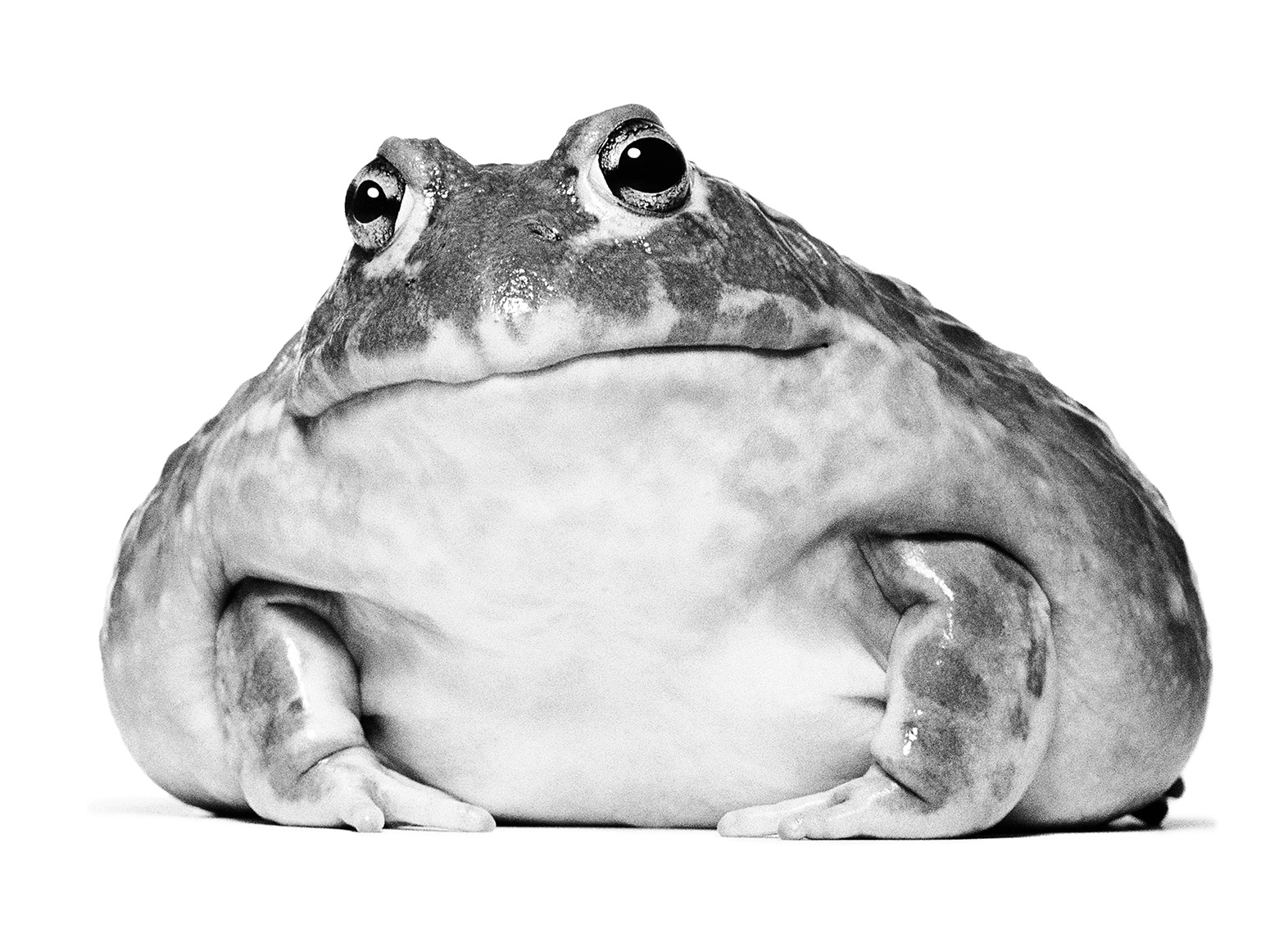 frog-2